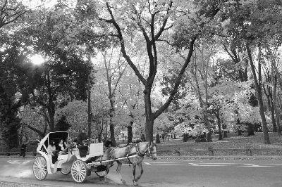 佳士得被迫停拍纽约中央公园设计图纸
